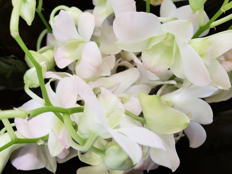 μικρά άσπρα λουλούδια σε μια floral ανθοδέσμη για το δώρο της αγάπης στοκ εικόνα