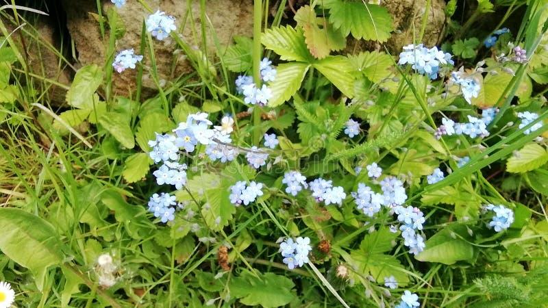 Μικρά άσπρα λουλούδια στο γερμανικό κήπο φύσης στοκ εικόνα