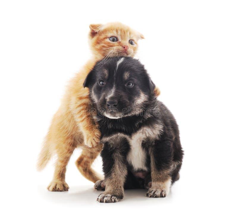 Μικρά γάτα και κουτάβι στοκ εικόνα