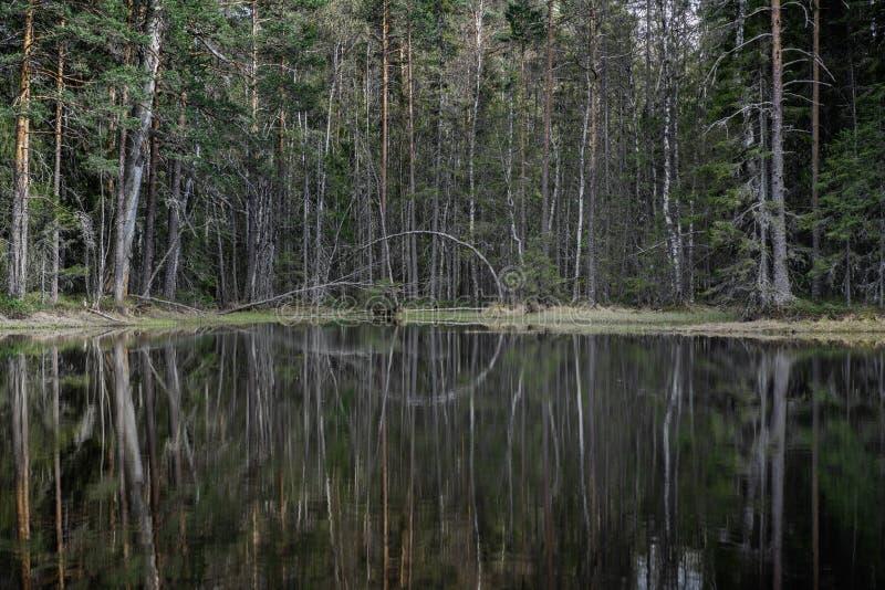 Μικρά δέντρα σε μια μικρή δασική λίμνη στη Σουηδία στοκ φωτογραφία