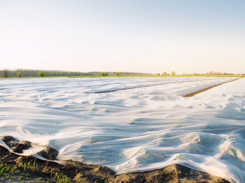 Μικρά θερμοκήπια Αυξανόμενο λαχανικό Spunbond για να προστατεύσει από τον παγετό και να κρατήσει την υγρασία των λαχανικών Γεωργι στοκ εικόνες με δικαίωμα ελεύθερης χρήσης