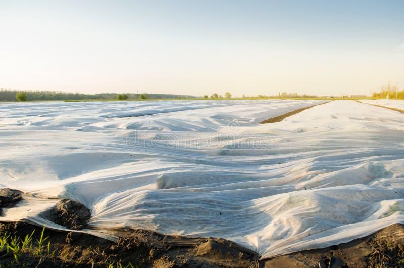 Μικρά θερμοκήπια Αυξανόμενο λαχανικό Spunbond για να προστατεύσει από τον παγετό και να κρατήσει την υγρασία των λαχανικών Γεωργι στοκ φωτογραφίες