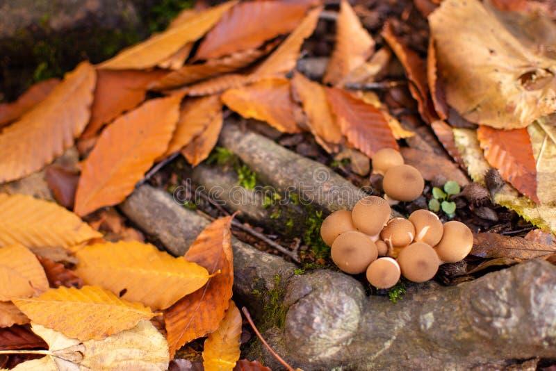 Μικρά μανιτάρια στις ρίζες δέντρων στοκ εικόνες
