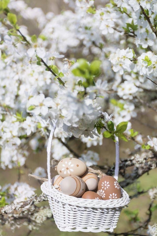 Μικρά μπεζ αυγά Πάσχας σε ένα καλάθι που κρεμά στους κλάδους ενός ανθίζοντας δέντρου κερασιών στοκ φωτογραφία με δικαίωμα ελεύθερης χρήσης