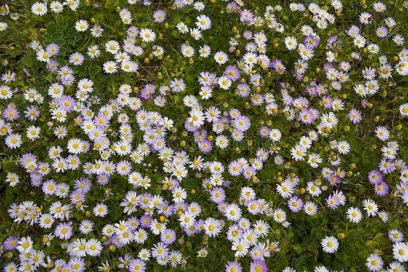 Μικρά λουλούδια στοκ φωτογραφία