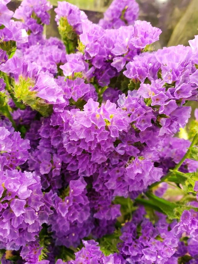 μικρά πορφυρά λουλούδια σε μια floral ανθοδέσμη, ένα υπόβαθρο και μια σύσταση στοκ φωτογραφίες με δικαίωμα ελεύθερης χρήσης