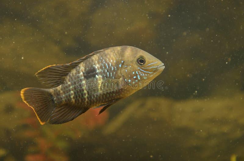 Μικρά ψάρια στοκ φωτογραφία με δικαίωμα ελεύθερης χρήσης
