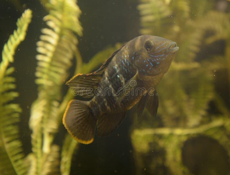 Μικρά ψάρια στοκ εικόνα
