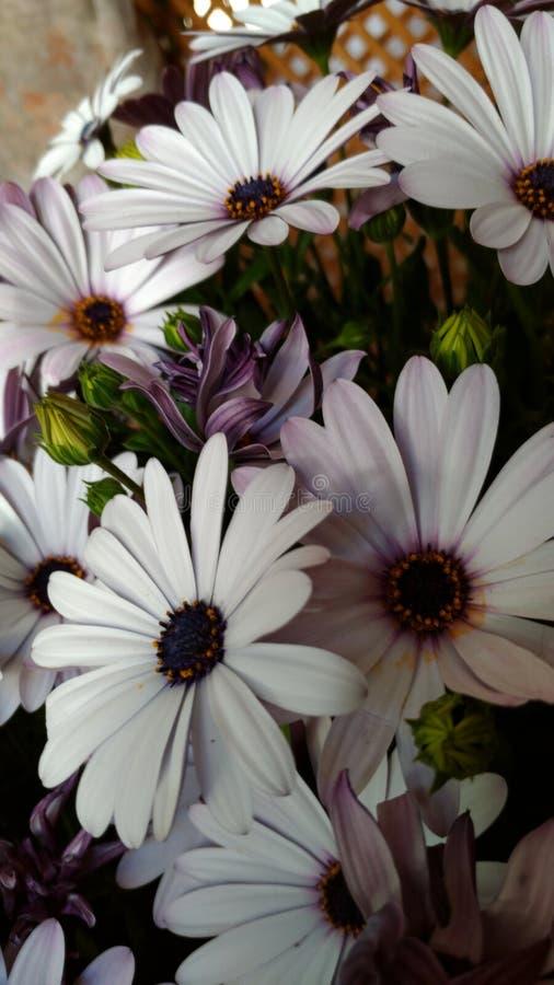 Μικρά όμορφα λουλούδια στοκ φωτογραφία με δικαίωμα ελεύθερης χρήσης