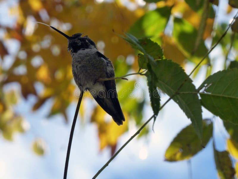 Μικρά Hummingbird Κατάρρευση χρωμάτων φόντου Καταρροή στοκ φωτογραφία με δικαίωμα ελεύθερης χρήσης