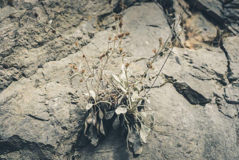 Μικρές εγκαταστάσεις βουνών που αυξάνονται στις ρωγμές μεταξύ των πετρών στοκ φωτογραφία με δικαίωμα ελεύθερης χρήσης