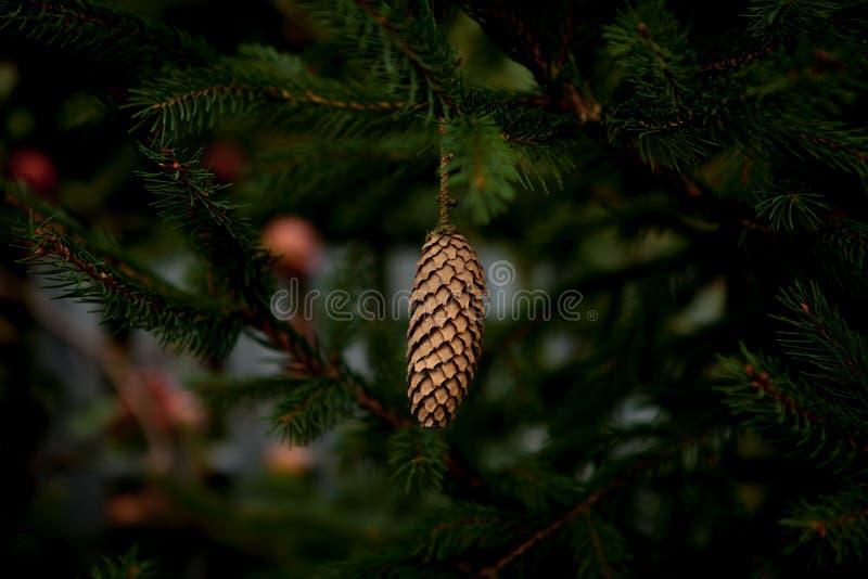 Μικρές προσκρούσεις σε μια fir-tree κινηματογράφηση σε πρώτο πλάνο Προσκρούσεις σε ένα δέντρο στοκ εικόνες