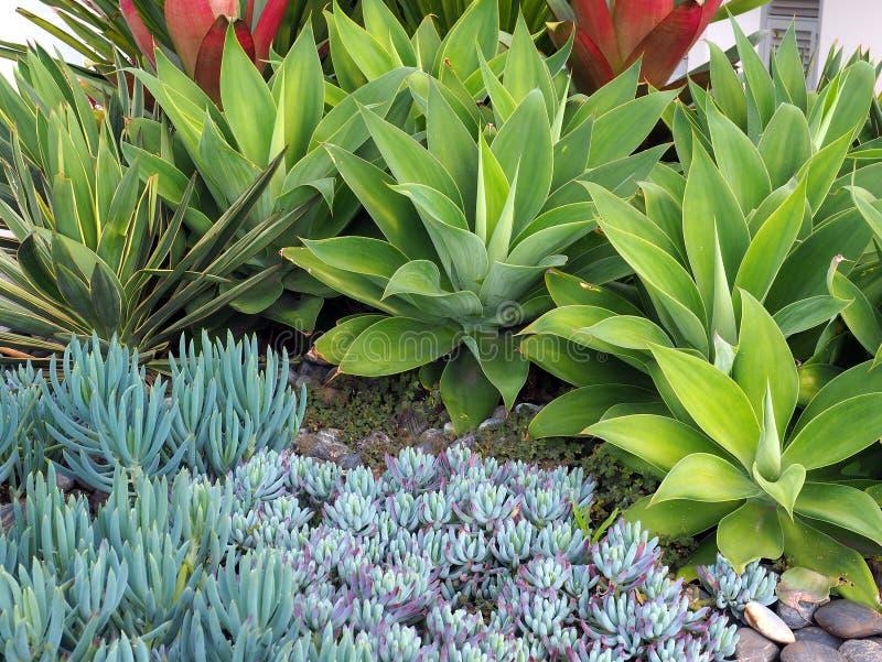 Μικρές Succulent εγκαταστάσεις κάκτων στον κήπο βράχου στοκ εικόνες