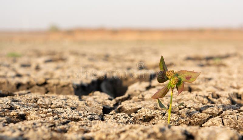 Μικρή ανάπτυξη δέντρων μέσω του ξηρού ραγισμένου μαύρου εδαφολογικού εδάφους με το διάστημα αντιγράφων στοκ εικόνα