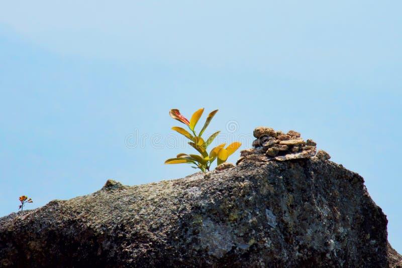 Μικρή ανάπτυξη δέντρων στην πέτρα με το μπλε ουρανό ενάντια ανασκόπησης μπλε σύννεφων πεδίων άσπρο σε wispy ουρανού φύσης χλόης π στοκ εικόνες