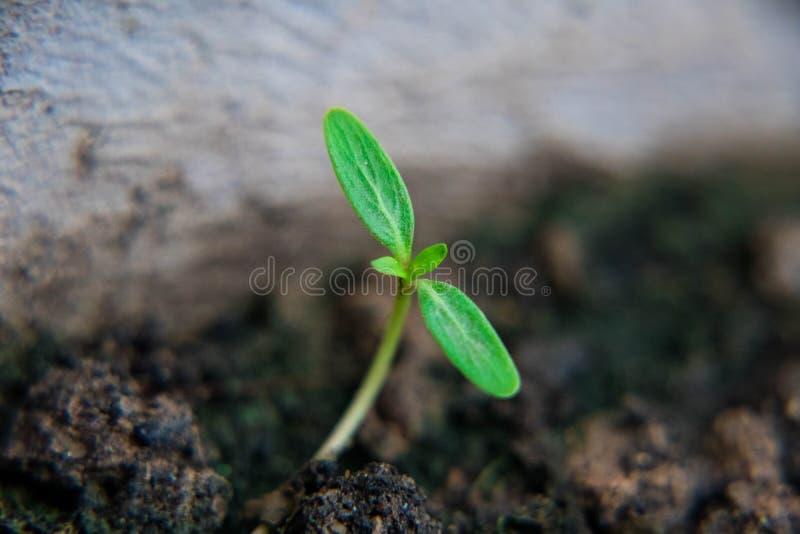 Μικρή ανάπτυξη εγκαταστάσεων στον κήπο Φρέσκια αυγή Εκτός από το περιβάλλον και τη νέα έννοια ζωής μετασχηματισμού στοκ φωτογραφίες