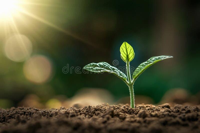 μικρή ανάπτυξη εγκαταστάσεων στο φως πρωινού στον κήπο γη έννοιας στοκ εικόνες