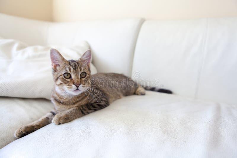 Μικρή γάτα στοκ φωτογραφία με δικαίωμα ελεύθερης χρήσης