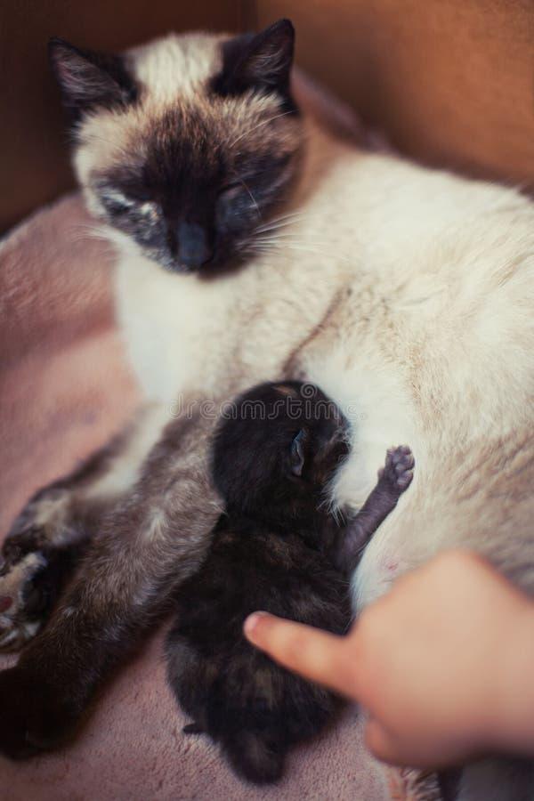 Μικρή γάτα Petting στοκ εικόνες