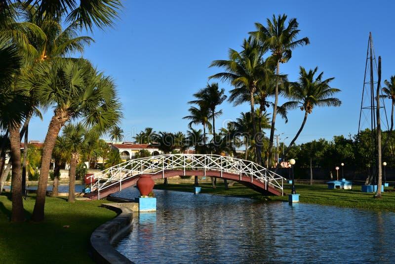 Μικρή γέφυρα στους φοίνικες σε Varadero, Κούβα στοκ φωτογραφία