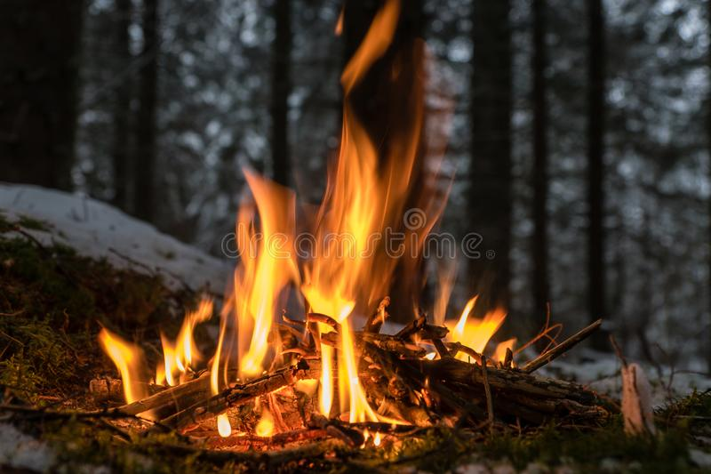 Μικρή θέση πυρκαγιάς στο δάσος στοκ εικόνες με δικαίωμα ελεύθερης χρήσης