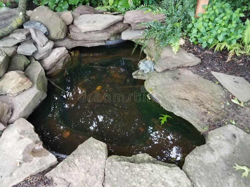 Μικρή λίμνη με τους βράχους και το βάτραχο στοκ εικόνες