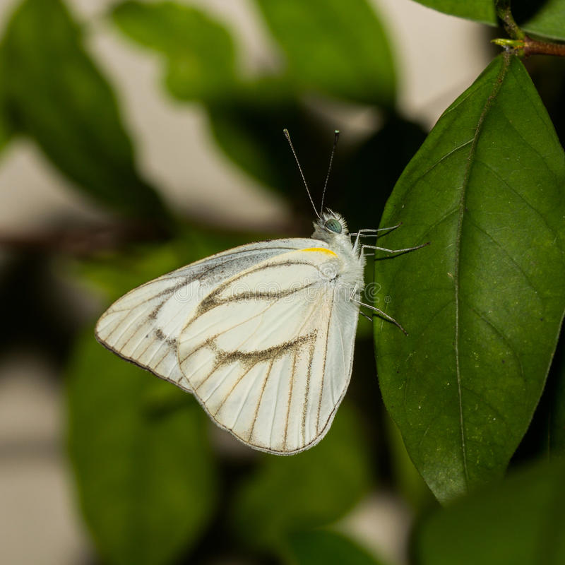 Μικρή πεταλούδα. στοκ φωτογραφία