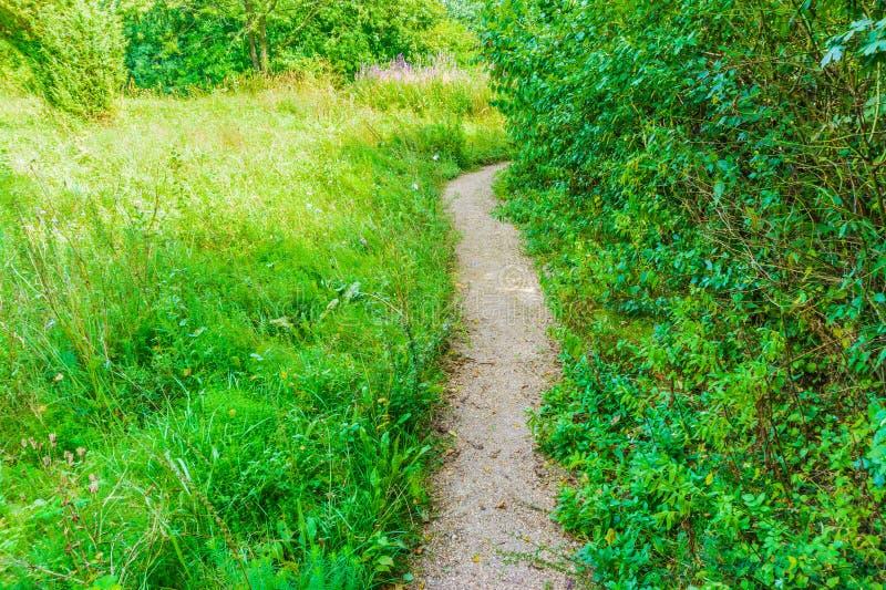 Μικρή πορεία περπατήματος σε ένα πράσινο δασικό τοπίο στοκ εικόνες