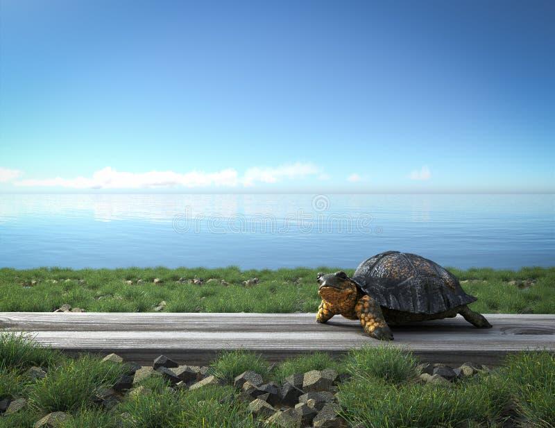 Μικρή πράσινη χελώνα στην παραλία στοκ εικόνες