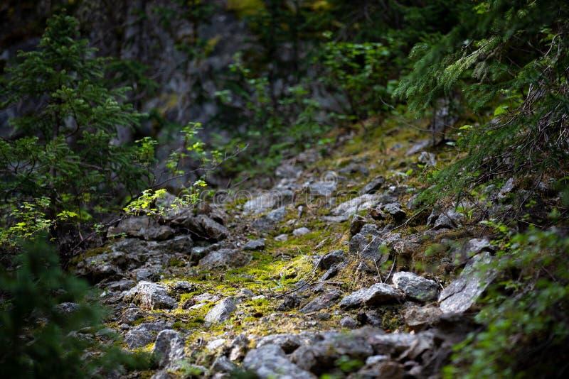 Μικρή πυράκτωση της ελπίδας στο δύσκολο εθνικό πάρκο βουνών στοκ φωτογραφία