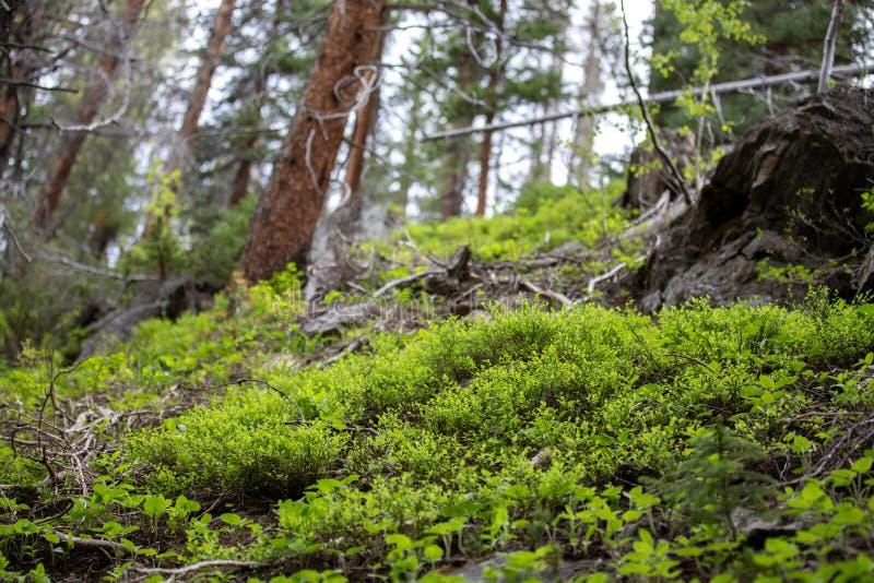 Μικρή πυράκτωση της ελπίδας στο δύσκολο εθνικό πάρκο βουνών στοκ εικόνες