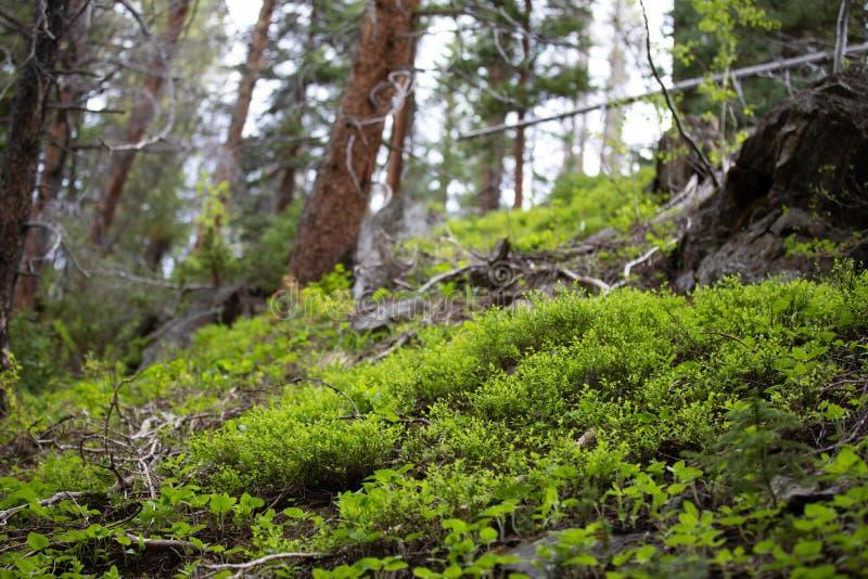 Μικρή πυράκτωση της ελπίδας στο δύσκολο εθνικό πάρκο βουνών στοκ εικόνα με δικαίωμα ελεύθερης χρήσης