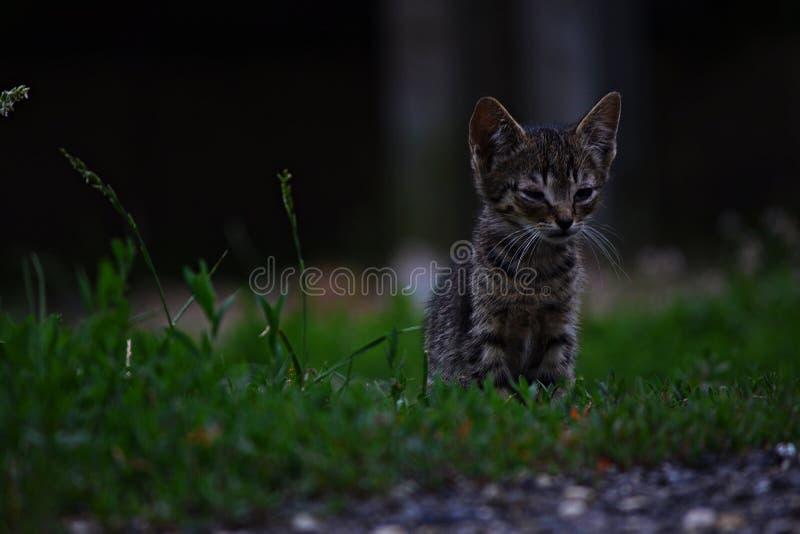Μικρή συνεδρίαση γατακιών στη χλόη στοκ εικόνες με δικαίωμα ελεύθερης χρήσης