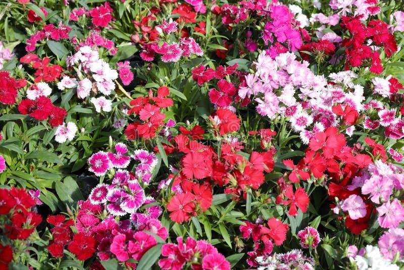 Μικρή συστάδα λουλουδιών, πλίθα rgb στοκ εικόνα