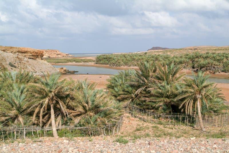 Μικρή όαση του νησιού Socotra στοκ φωτογραφίες