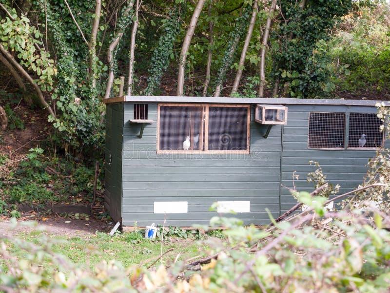 Μικρή outhouse χώρα υπόστεγων που μετατρέπεται στις φωλιές πουλιών με το περιστέρι στοκ φωτογραφίες