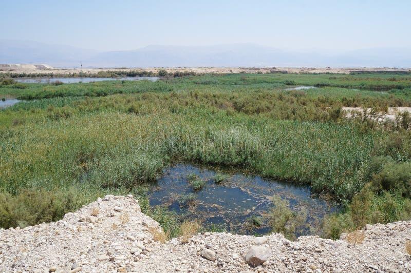 Μικροί λίμνη και υγρότοπος στοκ εικόνα