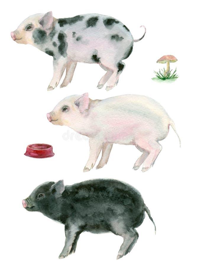 Μικροί χοίροι Watercolor διανυσματική απεικόνιση