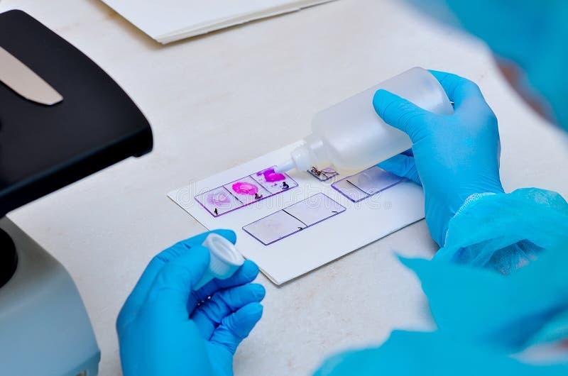 Μικροβιολογικό εργαστήριο Φόρμα και μυκητιακοί πολιτισμοί Βακτηριακή έρευνα στοκ εικόνες
