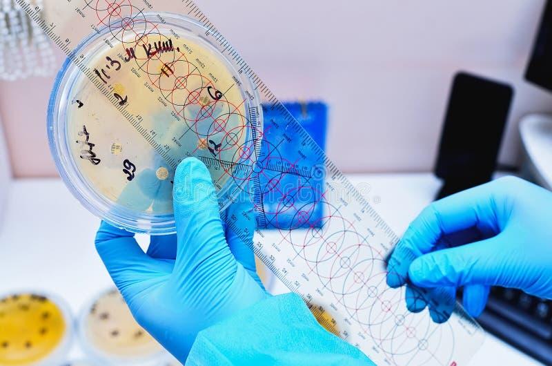 Μικροβιολογικό εργαστήριο Φόρμα και μυκητιακοί πολιτισμοί Βακτηριακή έρευνα στοκ φωτογραφία