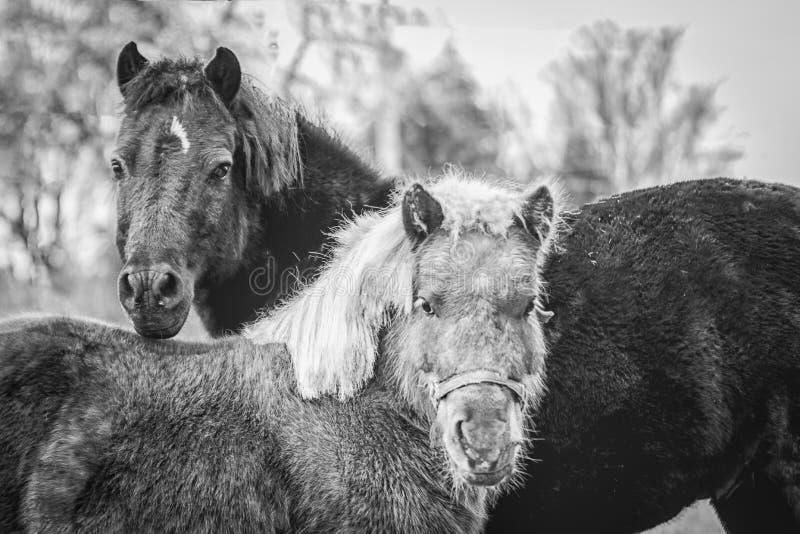 Μικροσκοπικά άλογα σε γραπτό στοκ φωτογραφία με δικαίωμα ελεύθερης χρήσης