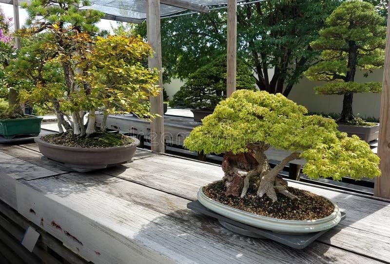 Μικροσκοπικά δέντρα μπονσάι στοκ φωτογραφία με δικαίωμα ελεύθερης χρήσης