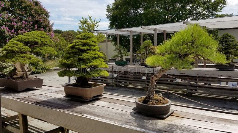 Μικροσκοπικά δέντρα μπονσάι στοκ εικόνες