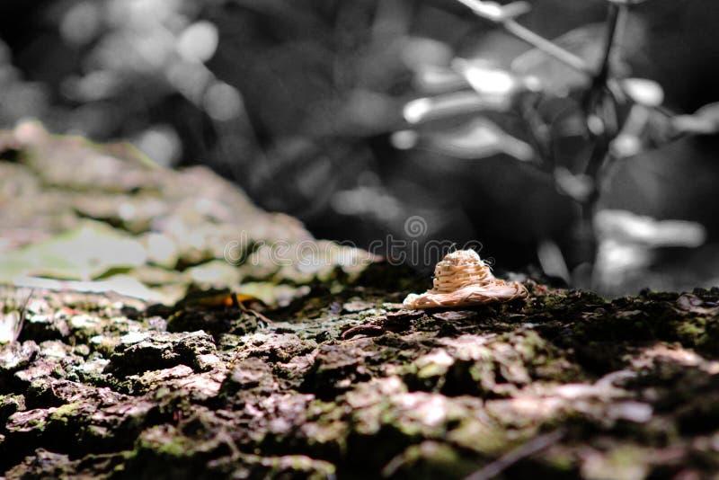 Μικροσκοπικές ζωές στοκ φωτογραφία με δικαίωμα ελεύθερης χρήσης