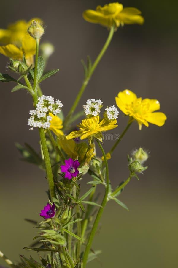 Μικροσκοπική ανθοδέσμη της Αλαμπάμα Wildflower στοκ εικόνα