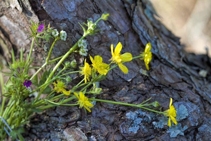Μικροσκοπική ανθοδέσμη της Αλαμπάμα Wildflower στο φλοιό δέντρων στοκ φωτογραφίες με δικαίωμα ελεύθερης χρήσης