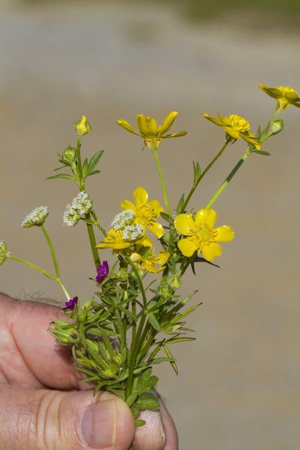 Μικροσκοπική προσφορά ανθοδεσμών της Αλαμπάμα Wildflower στοκ φωτογραφία