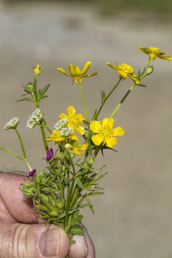 Μικροσκοπική προσφορά ανθοδεσμών της Αλαμπάμα Wildflower στοκ φωτογραφία με δικαίωμα ελεύθερης χρήσης
