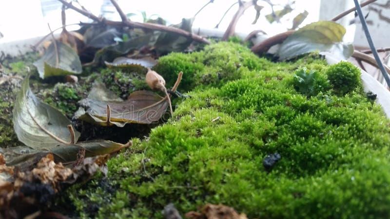 Μικροσκοπικός κόσμος στοκ εικόνες με δικαίωμα ελεύθερης χρήσης