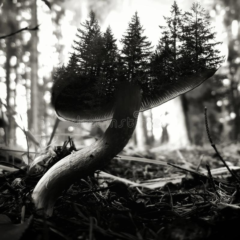 Μικροσκοπικός μύκητας του Forrest στοκ φωτογραφία